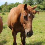 Spa chevaux a adopter