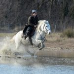 Cheval camargue a donner