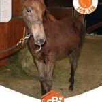 Refuge pour chevaux a adopter