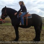 Cheval percheron donner