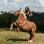 Donne cheval de trait