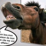 Annonce poney